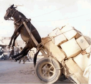 Image of a donkey lifted into the air by its harness due to an excessive load.